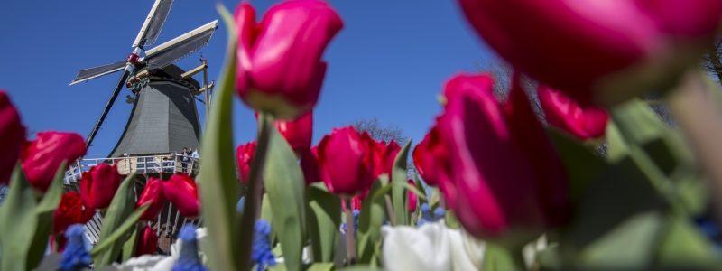 visite des moulins et fleurs