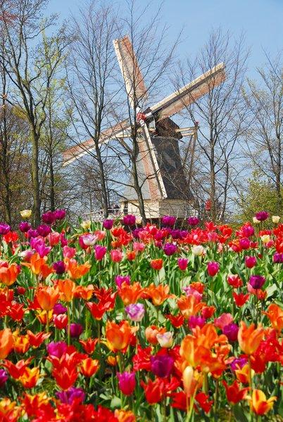 parc des tulipes keukenhof